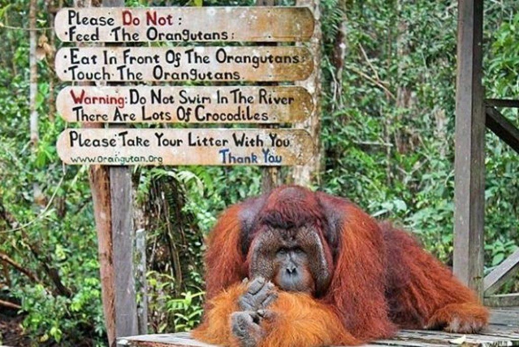 5 Hal yang Bisa Dilakukan di Taman Nasional Tanjung Puting