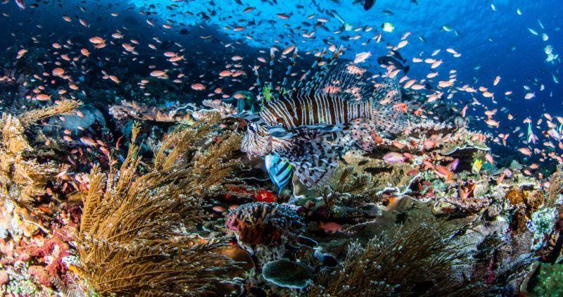Keindahan laut di Wakatobi