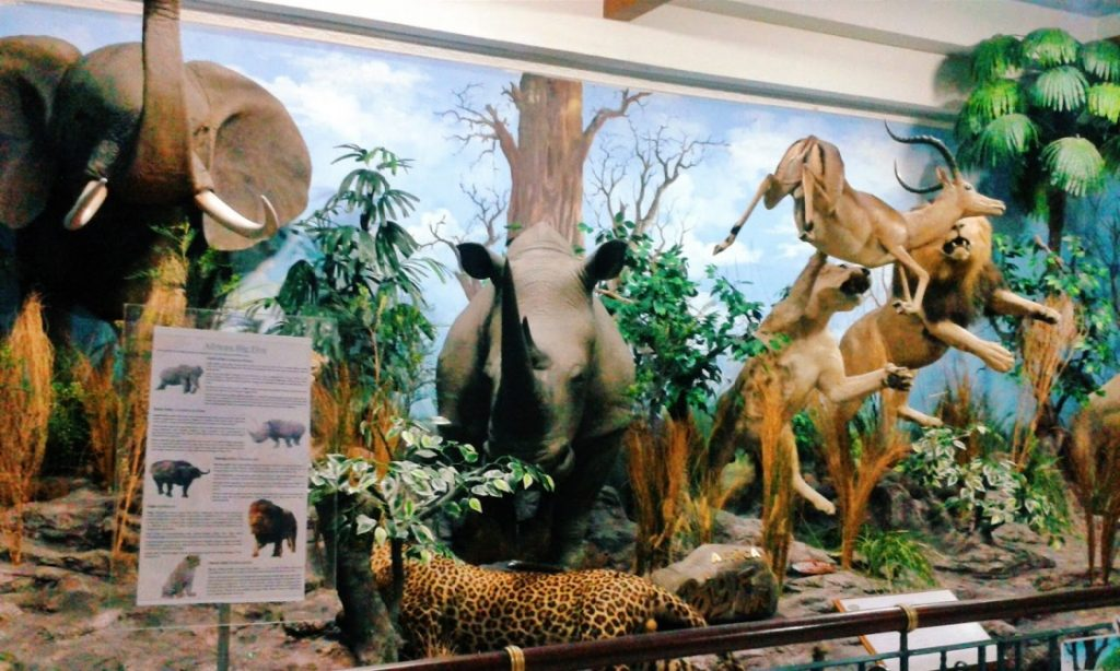 Rahmat International Wildlife Museum and Gallery