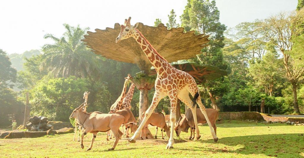 Taman Safari Bogor - tempat wisata bogor